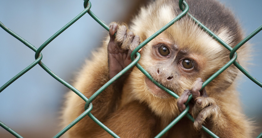 18 Levensgrote apen vormen samen levend spandoek